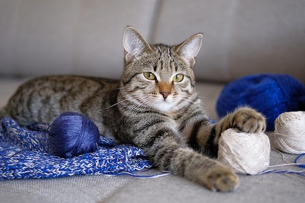 Kot domowy leży na niezwiązanym projekcie dziewiarskim lub wełnianym swetrze, patrząc na kamerę. kotek bawi się piłką przędzy, połóż łapę na motku nici. selektywne ustawianie ostrości.