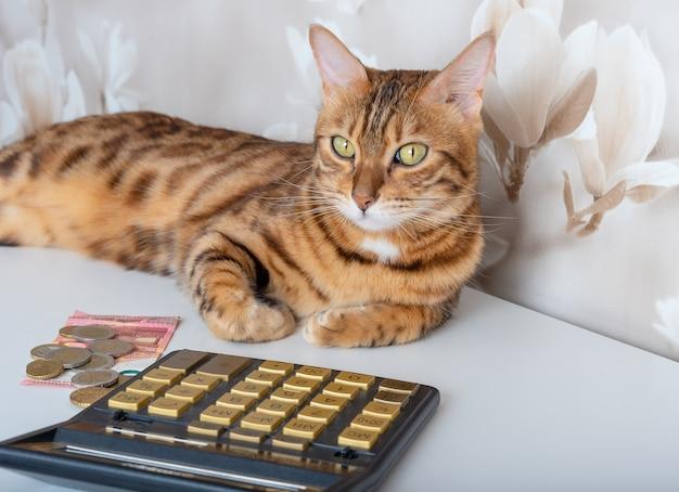 Kot domowy na stole z pieniędzmi i kalkulatorem oblicza wydatki na różne płatności