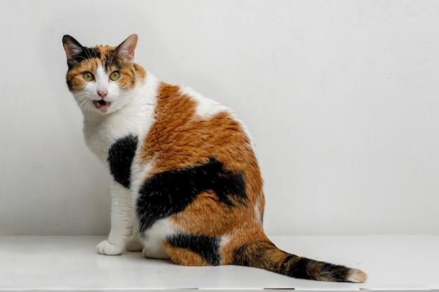 Kot domowy patrzący na powierzchnię reklamową zdjęcia