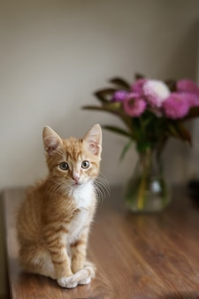 Kot domowy siedzi na stole obok wazonu z bukietem i komputerem. zdjęcie wysokiej jakości