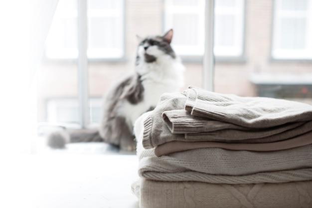 Kot domowy w oknie, dużo zimowych ciepłych ubrań. przytulna atmosfera i miasto za oknem.