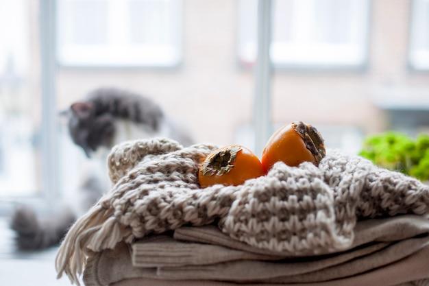 Kot domowy w oknie, dużo zimowych ciepłych ubrań, szalik i owocowa jesień. przytulna atmosfera i miasto za oknem.