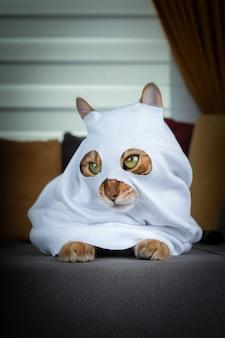 Kot domowy w stroju ducha siedzi na szarej sofie