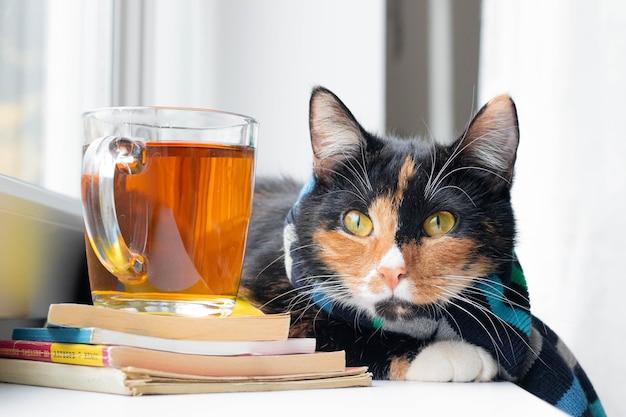 Kot domowy w szaliku i herbacie jesień wrzesień październik listopad zima