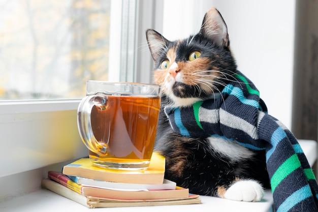 Kot domowy w szaliku i herbacie jesień wrzesień październik listopad