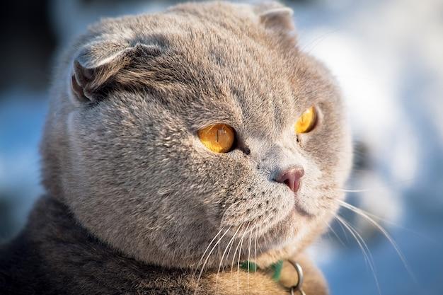 Kot domowy w zimowym krajobrazie