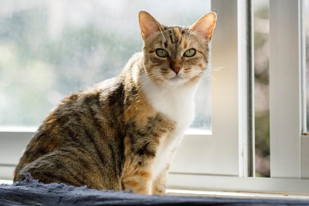 Kot domowy z boku okna domu