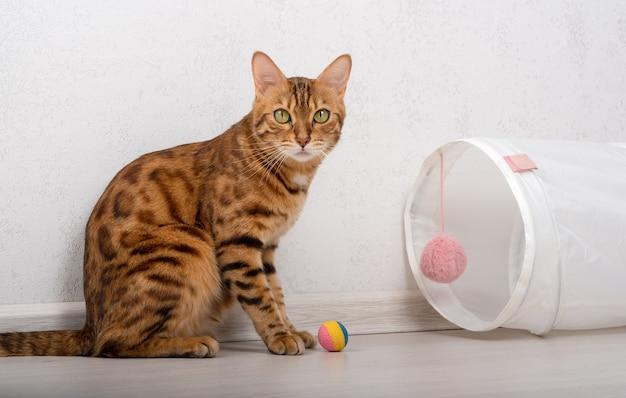 Kot domowy z czarnymi znaczeniami bawi się w pobliżu tunelu zabaw z wielokolorową piłką na podłodze.