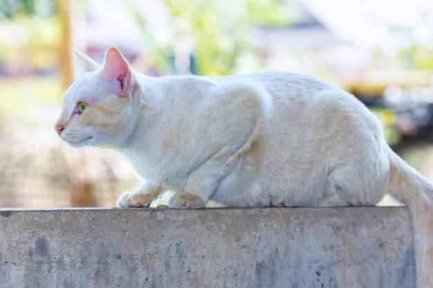 Kot gotowy do polowania