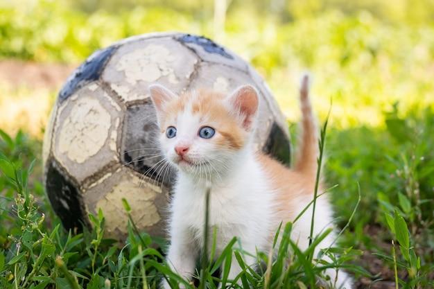 Kot grający w piłkę