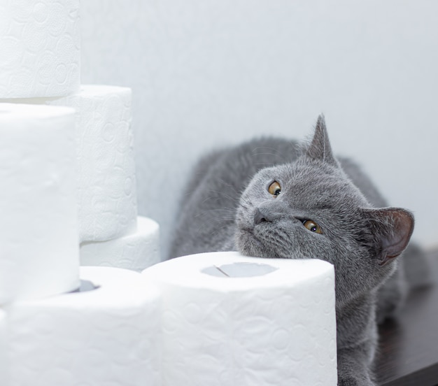 Kot i papier toaletowy. ogólna panika na papierze. brak papieru toaletowego.