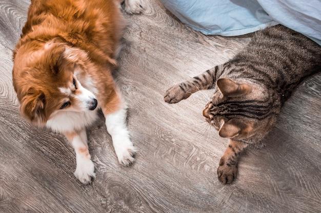 Kot i pies leżą razem na podłodze w mieszkaniu. zbliżenie portret.