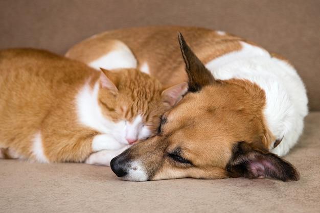 Kot i pies odpoczywają razem na kanapie. najlepsi przyjaciele.