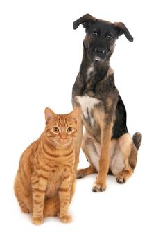 Kot i pies razem na białym tle