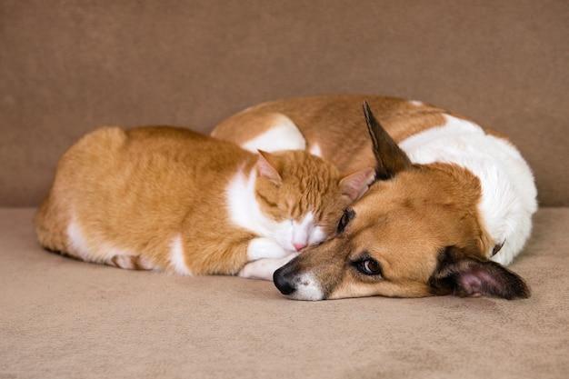 Kot i pies razem odpoczynek na kanapie. najlepsi przyjaciele.