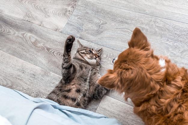 Kot i pies walczą. portret zbliżenie