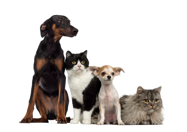 Kot i psy na białym tle