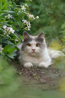 Kot i rośliny. kot z puszystym ogonem odchodzi. kot odpoczywa w ogrodzie
