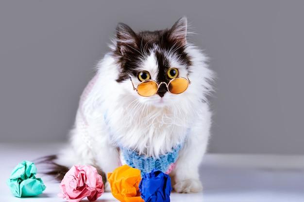 Kot i zły pomysł