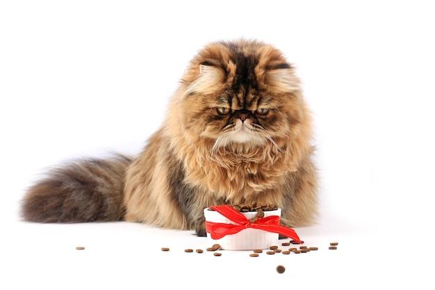 Kot jedzący suchą karmę na białym tle kociak perski