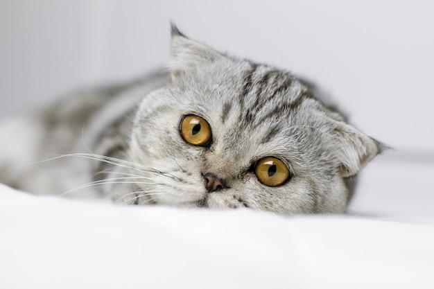 Kot jest przysiady na białym łóżku w pokoju.