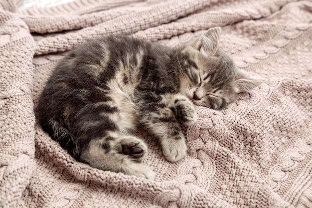 Kot kotek śpi na przytulnym różowym kocu. puszysty pręgowany kotek wygodnie drzemie na dzianinowym łóżku. kotek leżący, relaksujący. skopiuj miejsce.