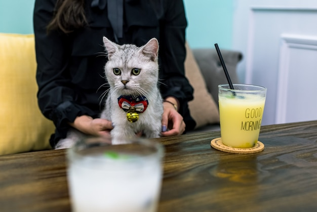 Kot, który chce się napić