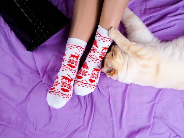 Kot leżący na kanapie w salonie ozdobiony świątecznymi nogami, kobiece nogi w skarpetkach świątecznych.