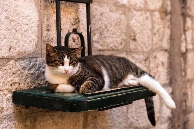 Kot leży na ulicy na specjalnym stojaku wiszącym na ścianie.