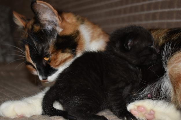 Kot liże swojego kociaka