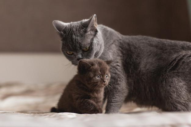 Kot liże swojego pięknego małego kociaka