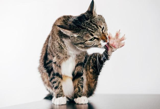 Kot myje łapę