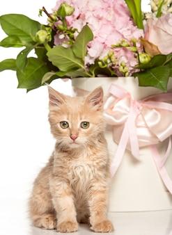 Kot na białej ścianie z kwiatami