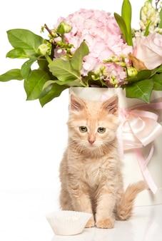 Kot na białym tle z kwiatami