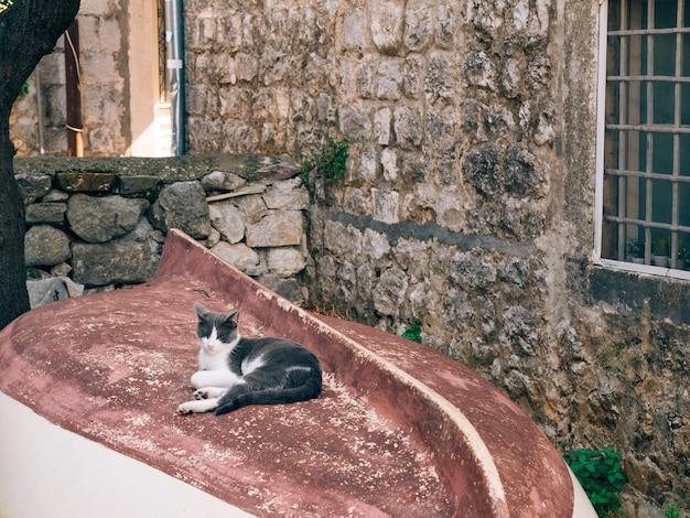 Kot na drewnianej łodzi rybackiej do góry nogami w perast czarnogórze