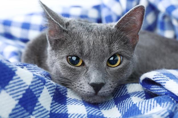 Kot na fioletowym kocu zbliżenie