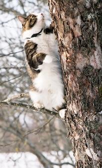 Kot na jabłoni w parku zimowym