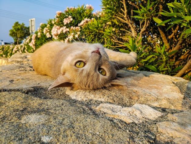Kot na kamieniu w lecie, cypr