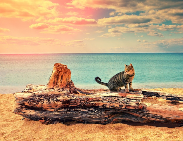 Kot na karku na plaży