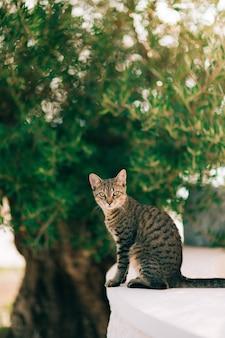 Kot na krawędzi budynku przed drzewem