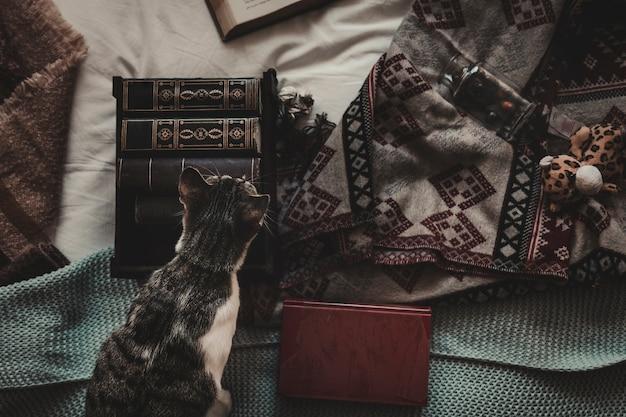 Kot na łóżku blisko książek