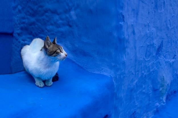 Kot na ulicy. chefchaouen. maroko. afryka
