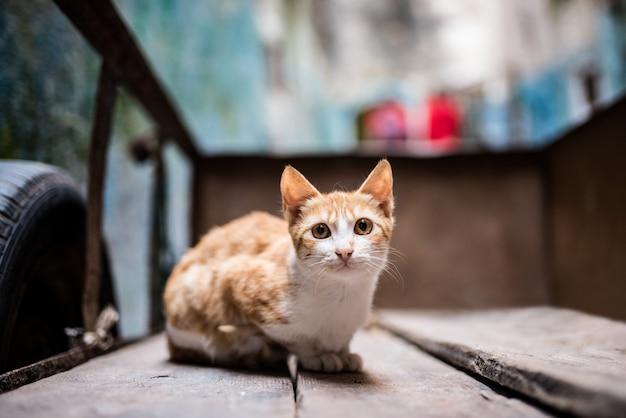 Kot na ulicy w taczki