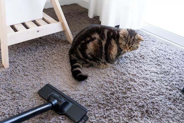 Kot odkurzacza rozłożył upuszczoną sierść kota