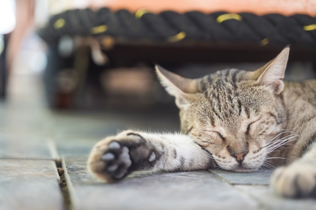 Kot odpoczywa i śpi w słoneczny dzień w lecie uliczny kot w naturze wysokiej jakości zdjęcie