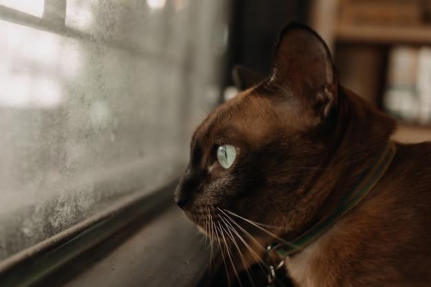 Kot odpoczywa i wygląda przez okno