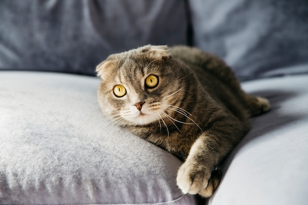 Kot odpoczywa na kanapie