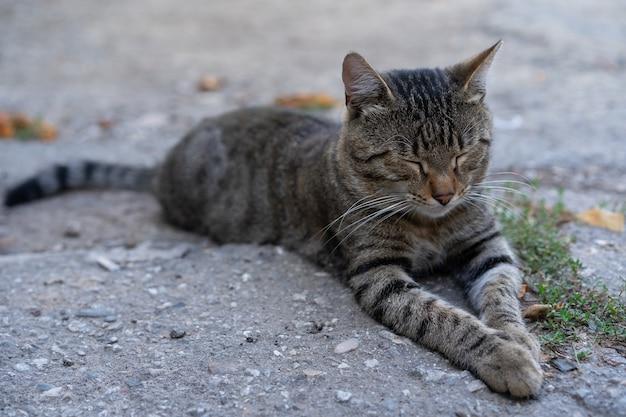 Kot odpoczywa na ziemi