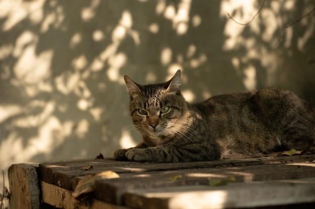 Kot odpoczywa w cieniu
