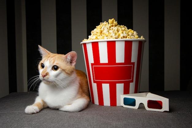 Kot ogląda telewizję z popcornem